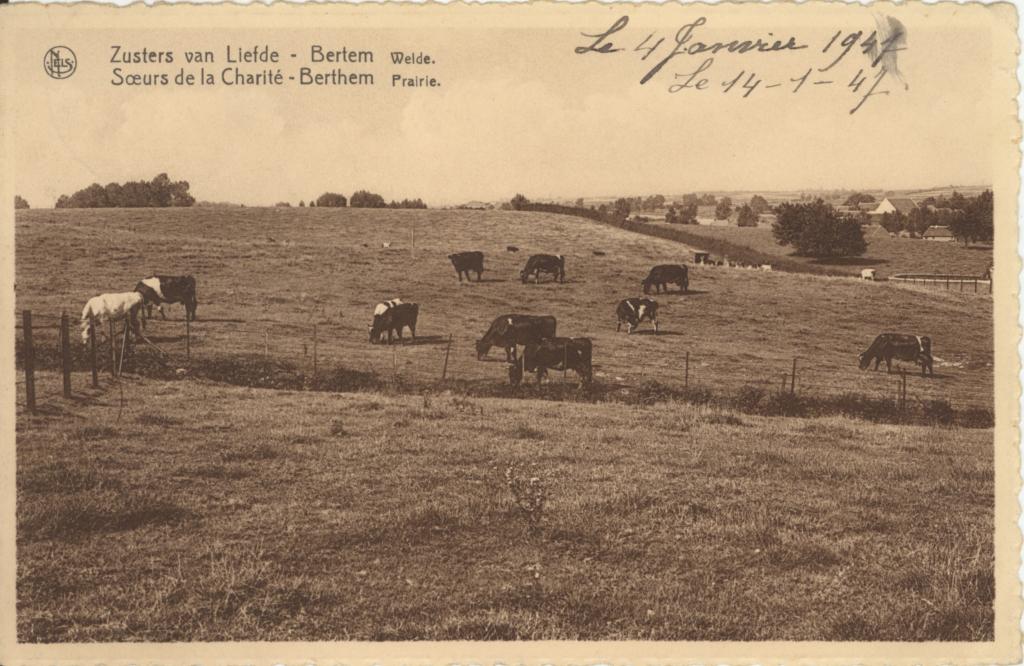 Beeld Bertem vroeger boerderij